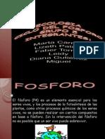 Ciclo Del Fosforo[1]