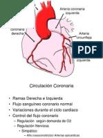 Circulación_coronaria