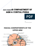 Anterior Compartment of Arm & Cubital Fossa