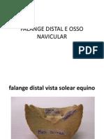 Falange Distal e Osso Navicular