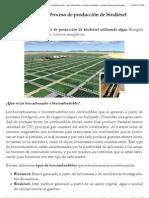 Biodiésel de Algas. Proceso de producción de biodiésel utilizando algas | Energías alternativas, energías renovables, energías limpias, bioenergías.