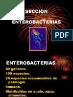 Microbiologia enterobacterias