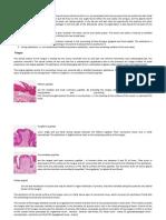 resumos histologia II pratica - inglês