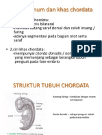 biologi chordata