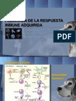 Inmunofisiologia 2012 CONCEPTOS BÁSICO (NO EVALUADO)