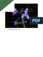 jenis2 orkid