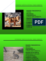 Fauna Serranias y Valles Interandinos