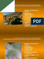Flora altoandina