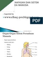 Pernafasan & Sistem Ekresi Oke