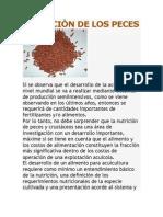 NUTRICIÒN DE LOS PECES