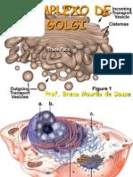 Aula 11_Complexo de Golgi