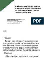 Pengaruh Konsentrasi Ekstrak Daun Sirih Merah (Piper