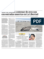 Desastre en ecología al morir 150 aves en las playas de La Libertad en Perú