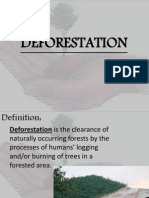 c168Deforestation