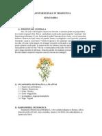 Www.referat.ro Plante Medic in Ale
