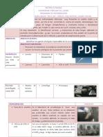 micosis cutaneas informe