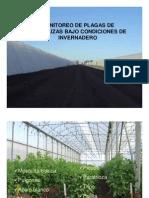 Monitoreo de Plagas en Cultivos Protegidos