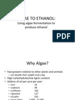 Algae to Ethanol