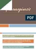 bioquimica. gluconeogenesis