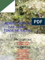 MORFOLOGÍA DE LAS ALGAS