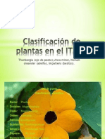 Clasificación de plantas en el ITMFS
