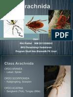 Arachnid A