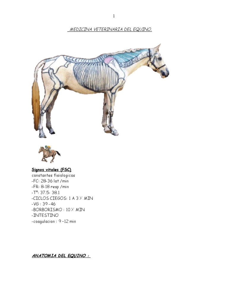 Medicina Veterinaria Del Equino Grande