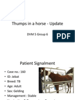 Thumps in a Horse - Update
