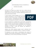 Informe de Fisiologia de Los Cultivos i Caupi.......