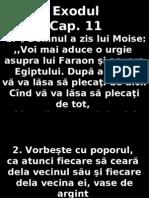 Exod 11