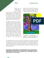 fotosintesis (porquelabiotecnología) adaptado 08
