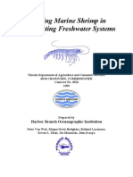 Farming Marine Shrimp in Recirculating Freshwater Systems
