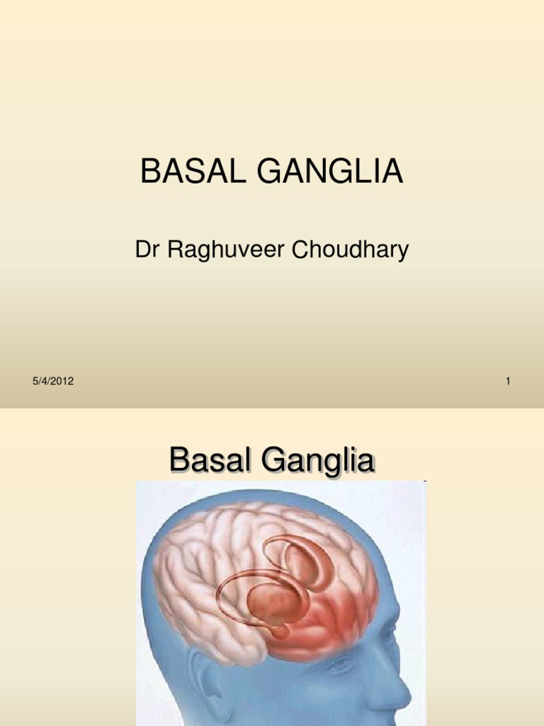 Basal Ganglia Physiological aspects | Basal Ganglia | Striatum