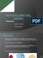 Metabolismo+Del+Hierro