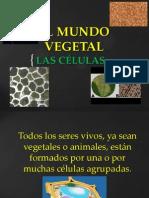 EL MUNDO VEGETAL