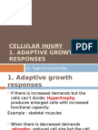Cellular Injury2