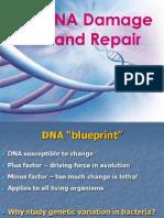 DNA+Repair+Lecture+1+2012