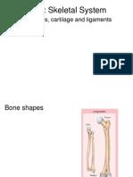 Ch 8 Skeletal System Notes