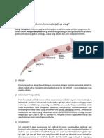 Tugas Farmakologi Unpri by Dian