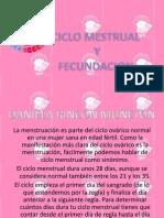 CICLO MESTRUAL  (2)