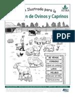 Cabras y Ovinos Cartilla Ilustrada