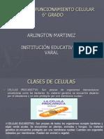 CÉLULAS Y FUNCIONAMIENTO CELULAR