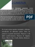 Universidad Autonoma Del Sur Pwr Point