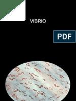 VIBRIO.pps