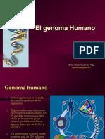 Clase 6 Genoma