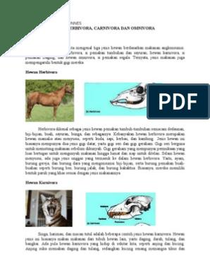 40+ Gambar Macam-macam Hewan Karnivora Herbivora Dan Omnivora HD Terbaru