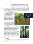 Hình thái phân loại thực vật