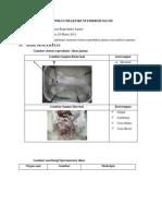 Laporan Praktikum Embriologi III