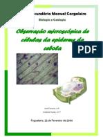 Relatório - observação microscopica de celulas da epiderme da cebola