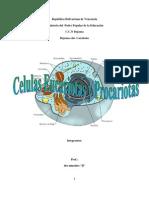 Celulas Eucariotas y Pro Car Iotas